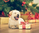 PAWSITIVELY WONDERFUL! Send the gift Gift of a DNA My Dog Test
