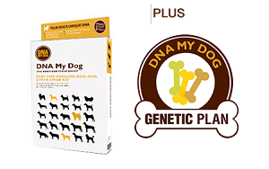 DNA Breed Identification Test  PLUS Full Genetic Screening